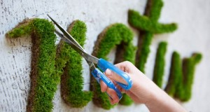 Learn How to Make Moss Graffiti. Crazy!